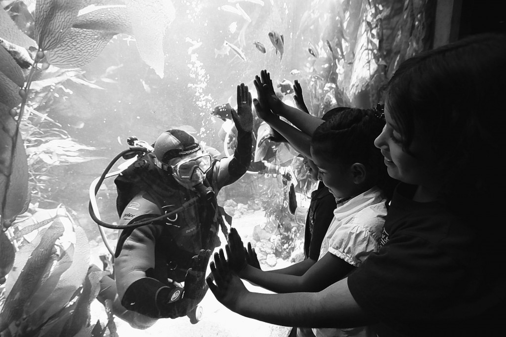 Children interact with a diver inside a 188,000-gallon tank populated with more than 1,500 fish, kelp and other marine life. It is part of the new Ecosystems Experience, an exhibition that features a blend of live animals and hands-on science exhibits in 11 environments at the California Science Center in Los Angeles. The exhibit opens to the public Thursday.