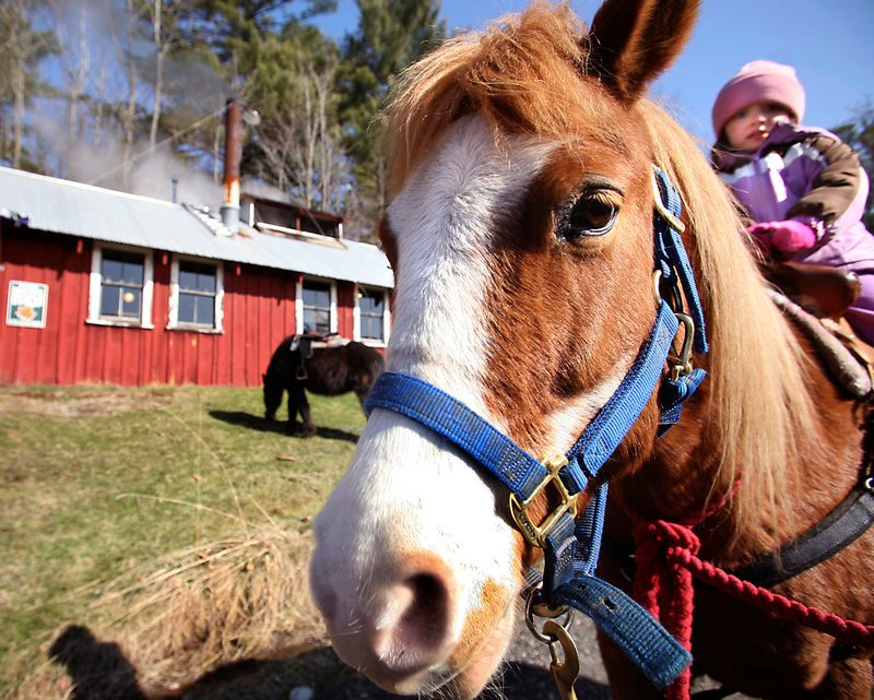 Surprise, a 15-year-old half-Appaloosa and half-Shetland pony gives Abby Binette, 3, of Biddeford a ride at Cole Farm in Dayton.