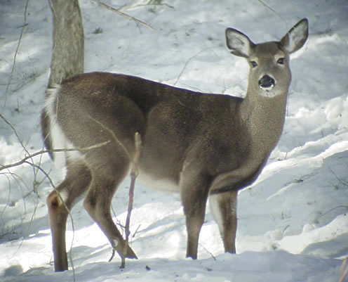 Back-to-back mild winters bode well for the state''s deer herd, but the dwindling deer population in northern Maine continues to be a hot topic.
