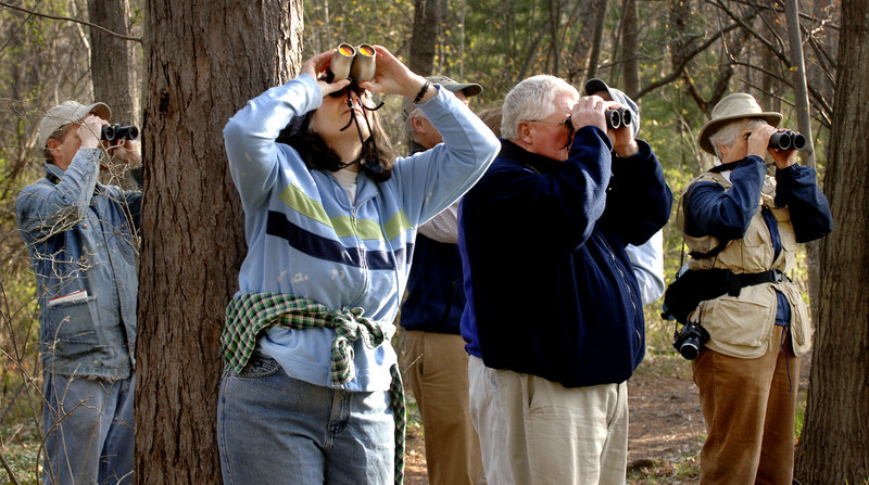 Birders search for specimens at Evergreen Cemetery in Portland.