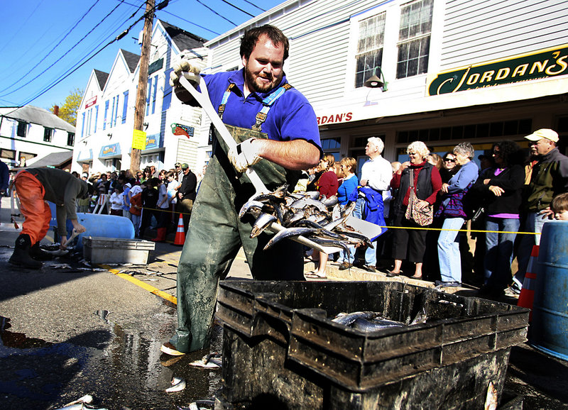 Travis Burnham of Boothbay shovels herring into trays during the bait-shoveling race. Burnham, a sternman on the Pesky Woman, finished third. The winner of the competition won a barrel of bait.