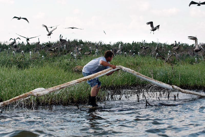 A Plaquemines Parish employee lays oil-absorbent boom as pelicans leave their nests on an island in Barataria Bay, just inside the coast of Louisiana, on Saturday. The island is home to hundreds of brown pelican nests as well as terns, gulls and roseated spoonbills.