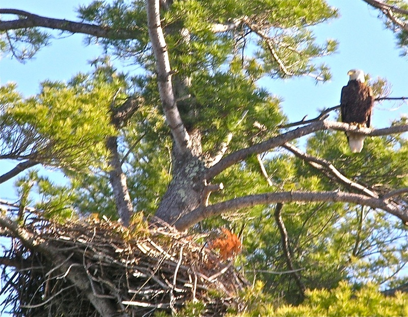 The writer's four-hour, seven-mile paddle yielded an astounding 10 eagle sightings