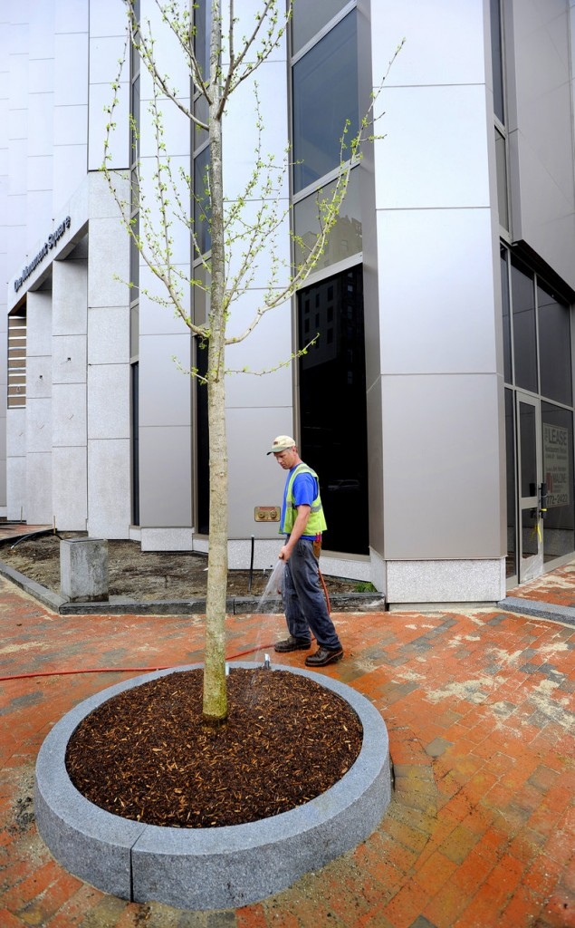 Public services worker Jay Ash-Cuthbert waters a tree planted in front of the One Monument Square building Thursday morning. Fifteen planter wells are being installed in the square off Congress Street to hold hackberry trees, which produce a small fruit resembling a cherry.