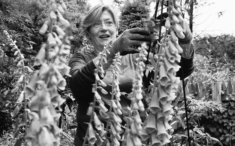 Marianne Bays works in a flower garden at her home Friday in Montclair, N.J. After decades as a business consultant, Bays wants to try a new career – selling medical marijuana. She's traveled California to research dispensary possibilities.