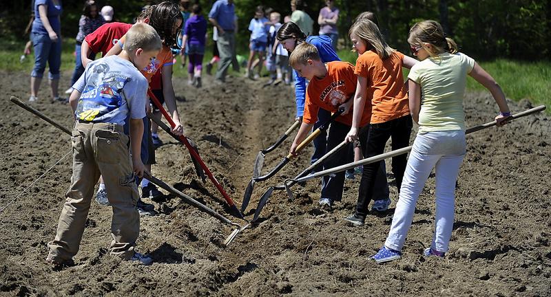 Fourth-graders from the Mast Landing School prepare the row they will use to plant corn on a plot of land at the Pettengill Farm in Freeport