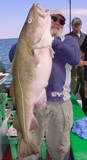 Don Prior proudly struggles to hold up his 49-pound Tackle-Buster cod.