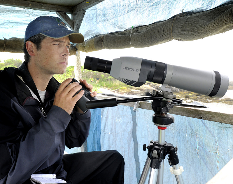 Biologist Wayne MacCabe watches least terns from a blind as he does bird research.