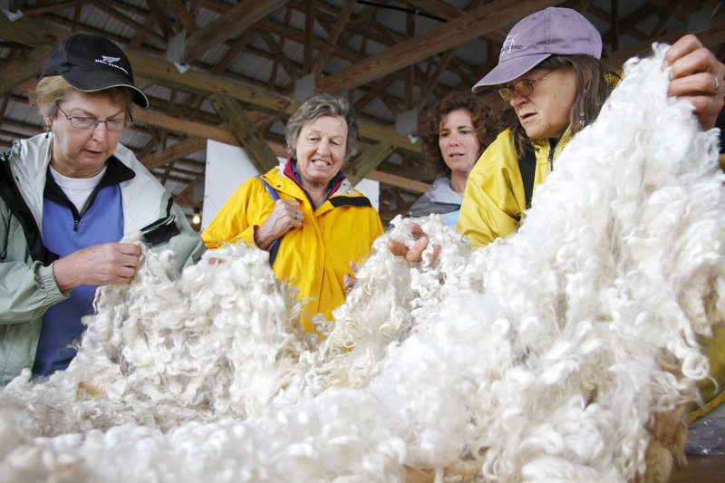 Maude March, left, helps spread fleece from a Lincoln long-wool ramfor judging as Ingrid and Atheline Wagner, center, look it over andBecky Bartovics, right, sees what it feels like.