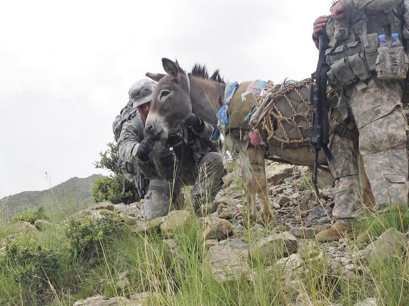 Sgt. Jonathan Weeks of Ellsworth feeds an energy snack to a pack donkey Sunday during the climb up a steep mountain trail to the observation post.