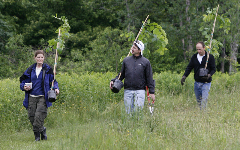 Rose Paul of The Nature Conservancy of Vermont, left, leads volunteers carrying elm tree saplings in Shelburne, Vt., on Thursday. The U.S. Forest Service hopes to spur efforts throughout New England to restore American elms to the landscape.