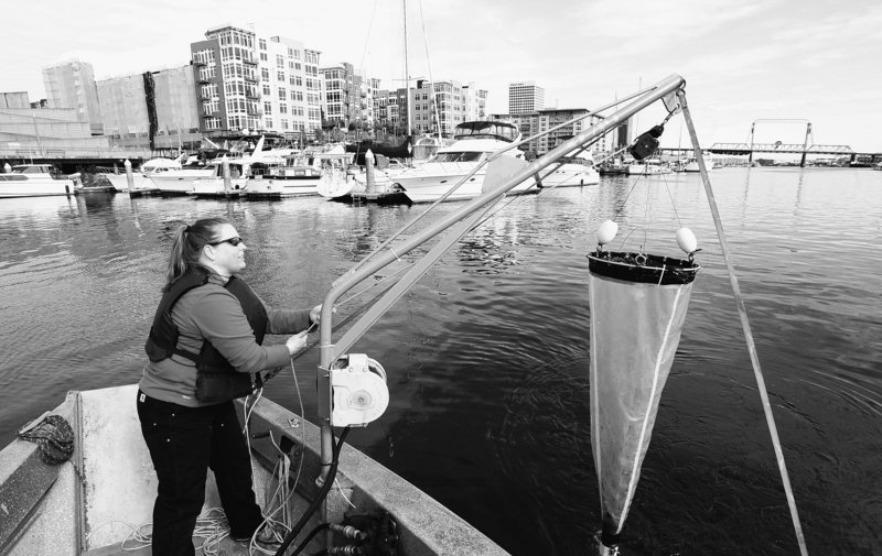 Julie Masura, a researcher with the University of Washington-Tacoma, hauls in a collection filter that was pulled through the Thea Foss Waterway in Tacoma.