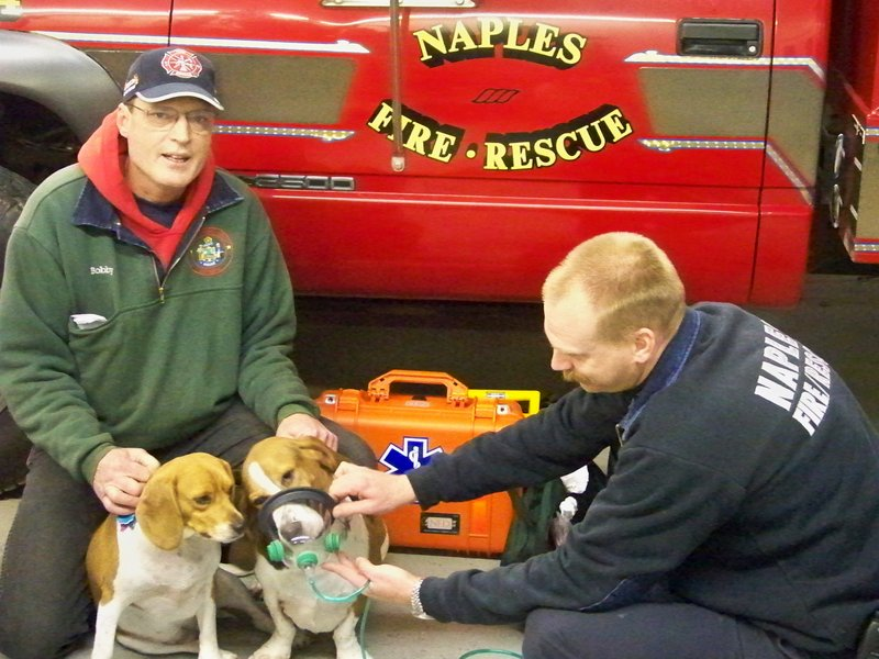 Naples Deputy Fire Chief Chris Burnham, right, demonstrates how to use a pet oxygen mask with Bobby Silcott's dog Elvis, while Silcott holds onto Elvis and his other dog, Priscilla.
