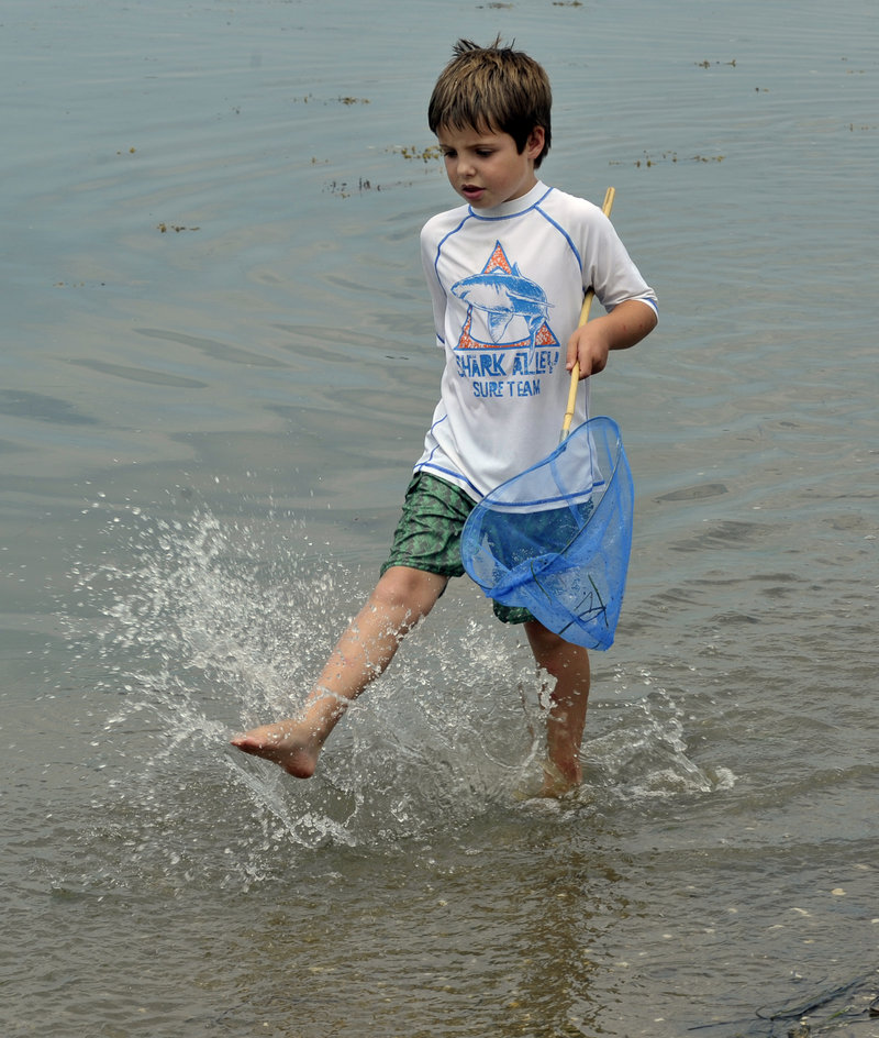 Max Rabey, 6, of Cumberland looks for crabs Tuesday at Sandy Point Beach on Cousins Island in Yarmouth.