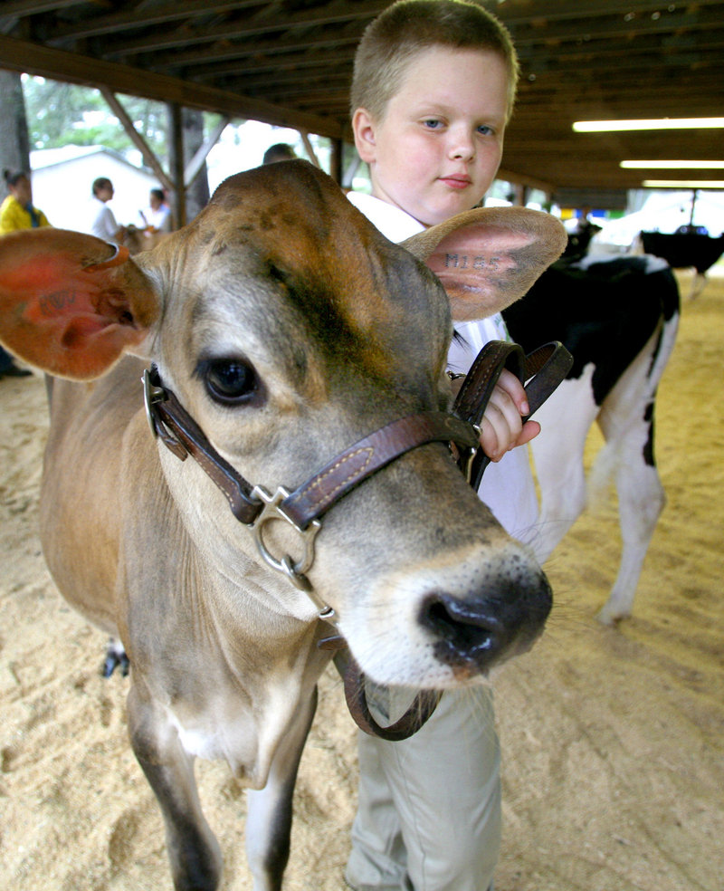 Keltan Tanguay, 10, of Gorham waits to show his 5-month-old Jersey dairy cow Miranda during the 4-H and Open Dairy Cattle Show.