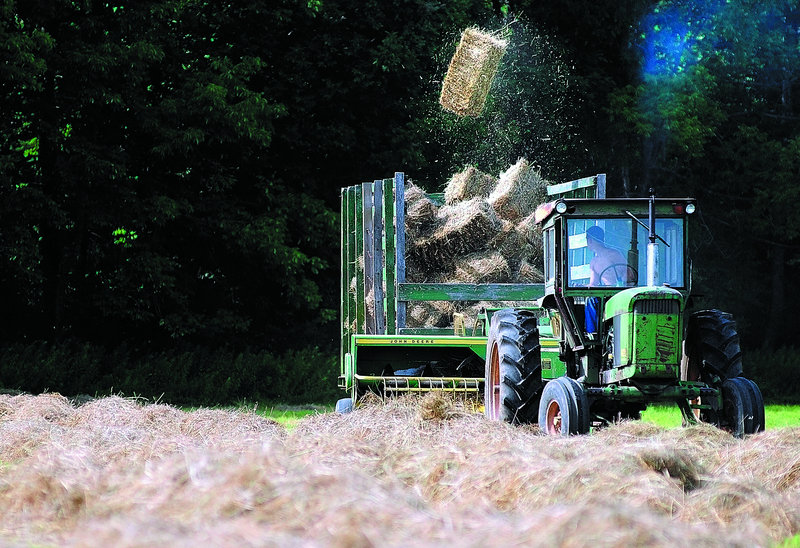 Dylan Fortin looks back as a bale of hay flies into the wagon as he collects hay Friday at Two Loons Farm in China. The hay will be fed to cattle at the organic farm.