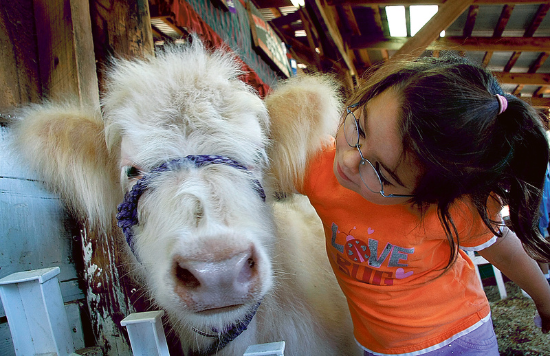 Elysia Elskamp, 10, of Sanford says hello to Sylvia, a Scottish Highlander calf owned by Winn Farm in Newfield, at the Acton Fair on Saturday.