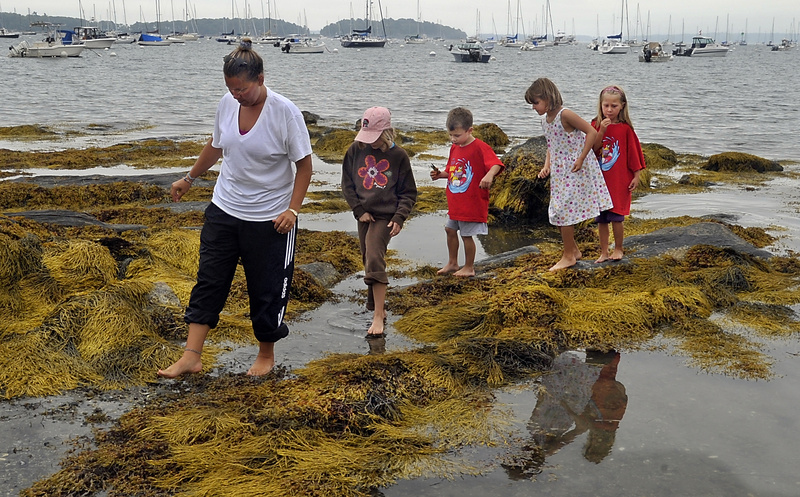 Amy Freese of South Portland walks carefully Monday while visiting Falmouth Town Landing with her children and their friends so they can look for crabs, periwinkles and other marine life. Behind Freese, from left, are Laura Lefebvre, 8, Lucas Lefebvre, 6, Emily Freese, 8, and Abigail Freese, 6.