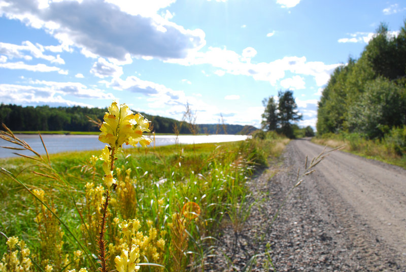 Many sections of the Sunrise Trail showcase the wide-open beauty of the Down East coast, with views of rivers, meadows and wildflowers.