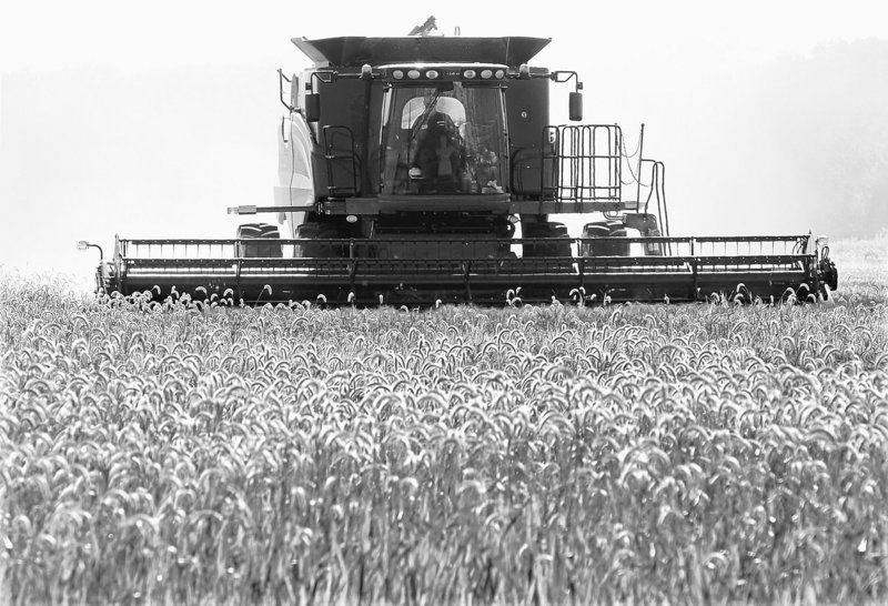 Richard Hendricks harvests his winter wheat crop in June near Chandlerville, Ill. Russia banned grain exports for the rest of the year last week after a severe drought and wildfires destroyed 20 percent of its wheat crop.