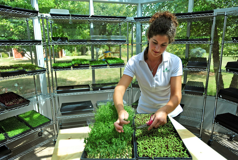 Kate Brun, owner of Lucky Leaf Gardens in Harrisburg, N.C., grows microgreens. Snow pea tendril, left, and Detroit beets are among the varieties she grows.