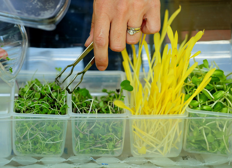 Kate Brun tends, from left, a mix of mustard, broccoli, cabbage and cauliflower; another mix of radish, broccoli, cabbage and cauliflower; popcorn shoots; and sunflower shoots.
