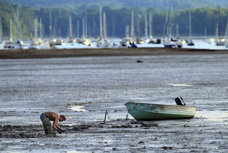 A clam digger works on a mud flat at low tide in Freeport. Predictions of widespread red tide outbreaks this summer in New England waters never materialized.