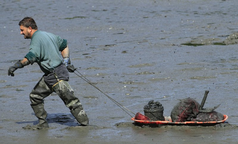 Ronnie Grant hauls a sled loaded with clams that he dug on a mud flat in Freeport.