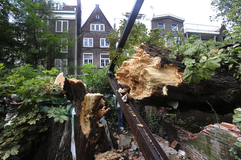The splintered trunk of the chestnut tree which comforted Anne Frank while she hid from the Nazis during World War II is seen after falling over Monday in Amsterdam, Netherlands. A metal support structure added in 2008 can also be seen.