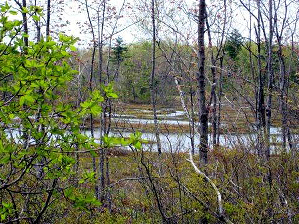 Cranberry Marsh North supports several species of rare plants and animals, including the spotted turtle. The easement will keep the land open to the public and prohibit development.