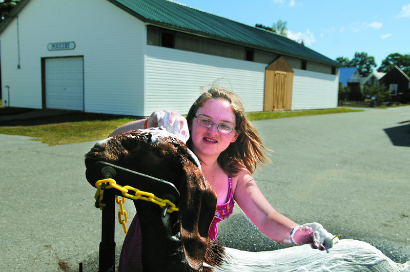 Danielle Mills, 12, shampoos a Boer goat on Tuesday at the Windsor Fairgrounds. The annual agricultural exhibition, which begins its nine-day run Sunday, attributes a large part of it's success to employees and volunteers.