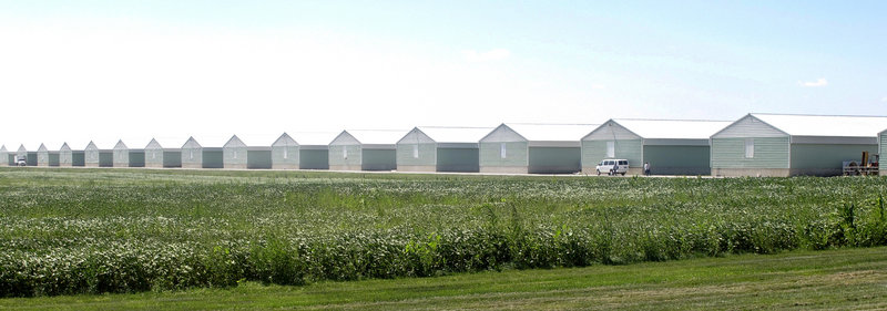 Investigators have found salmonella in feed for chickens confined at Wright County Egg in Galt, Iowa, above. Wright Egg Farms and Hillandale Farms have recalled more than a half-billion eggs linked to illnesses, and their hens are still laying millions of eggs every day.