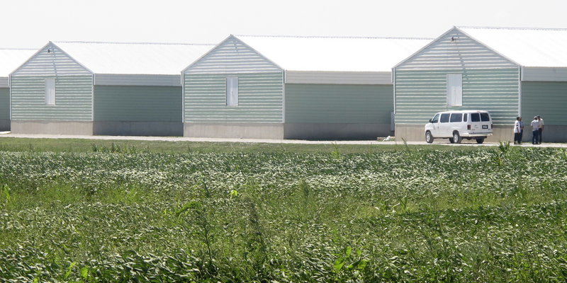 A chicken confinement site operated by Wright County Egg in Galt, Iowa, one of the egg producers whose products were linked to salmonella poisoning.
