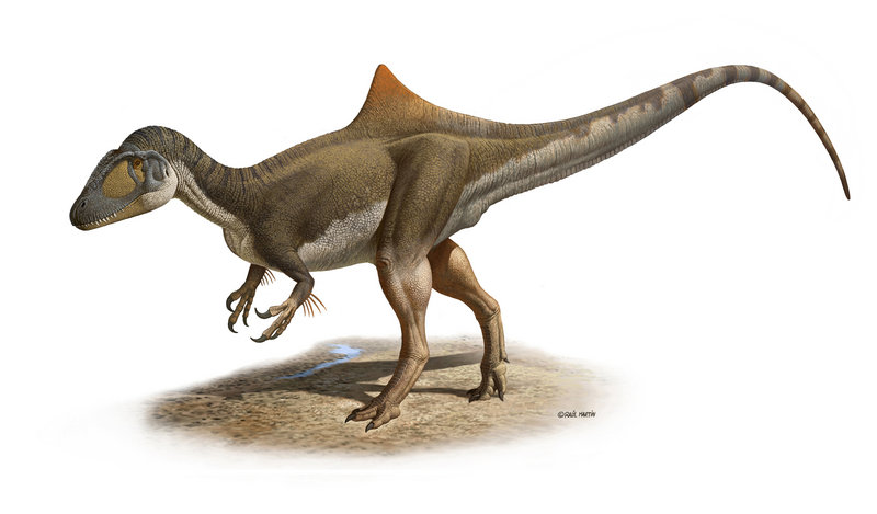 This image shows a hypothetical reconstruction of the recently found dinosaur remains. The pronounced hump may have functioned as an identifying feature to other dinosaurs.