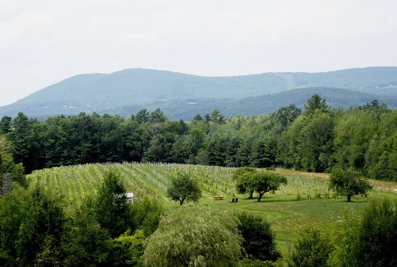 The Cellardoor vineyard, which winemaker Aaron Peet said this year may yield Cellardoor's first batch of wine made from Maine-grown grapes.
