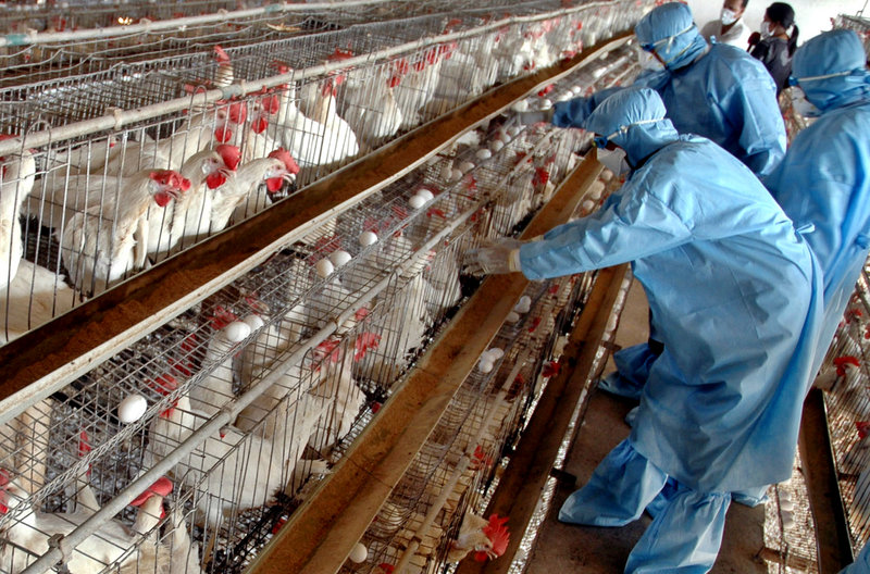 Chickens kept in confining cages are more likely to spread salmonella and other diseases, a reader says.