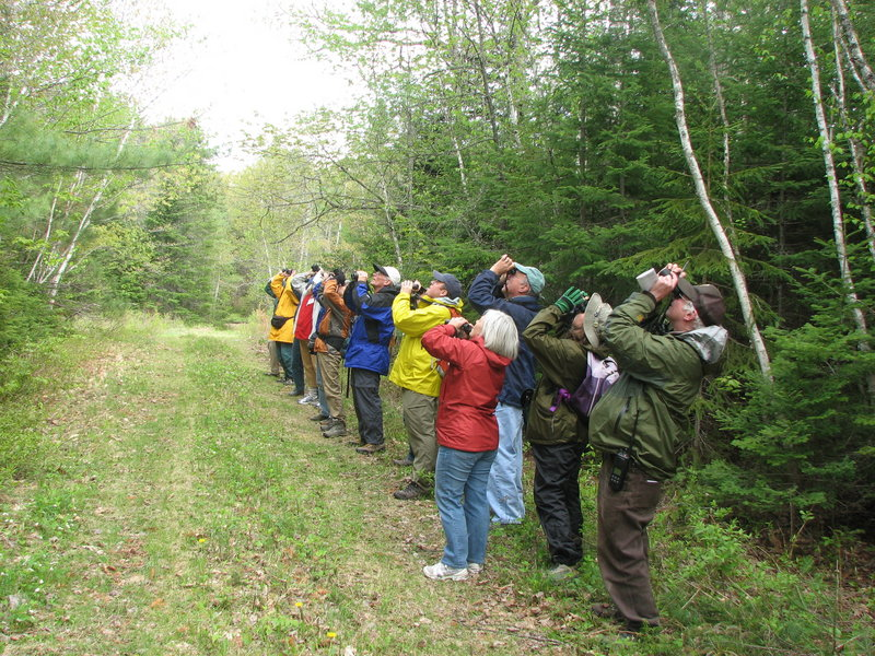Bird watchers – both casual and serious ones – will find valuable information in the Maine Birding Trail guidebook, which is designed to appeal to eco-tourists and residents who want to combine hiking and enjoyment of the state's abundance of bird life.
