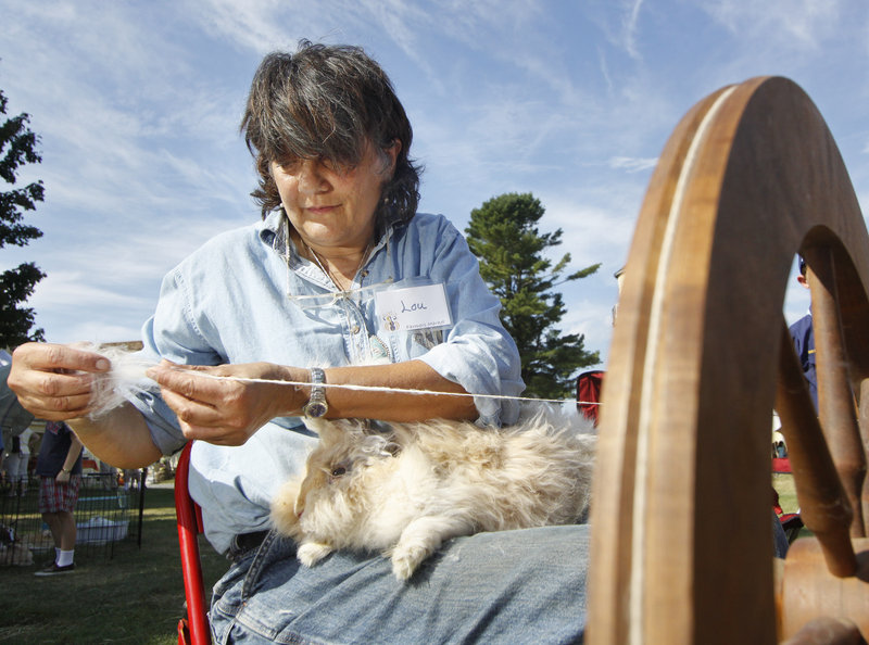 Louise Caron of Springvale spins wool from Fluffy, an English Angora rabbit.