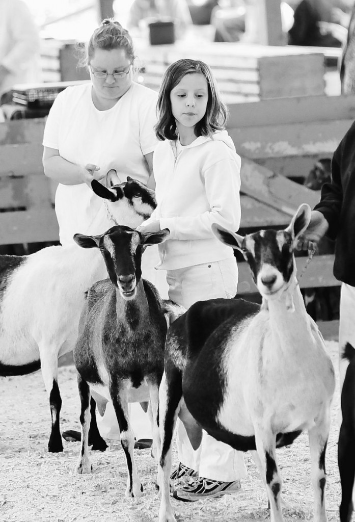 Reegan Hussey, 11, of Biddeford, with her mother, Tami Hussey, shows an Alpine dairy goat during the Cumberland County Fair on Sunday. The goats belong to Robert Cassette of Saco.