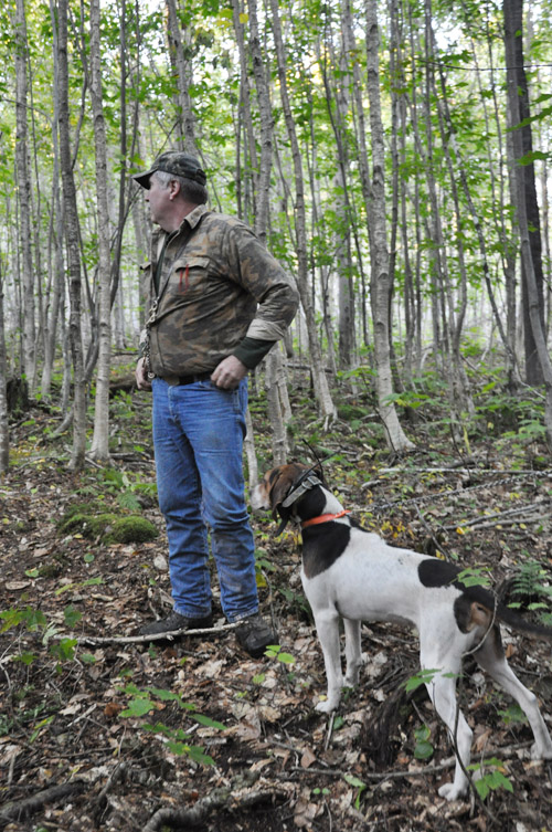 Maine Guide Bob Parker, owner of Stony Brook Outfitters, listens intently with one of his walker hounds as another hound sets out during a recent bear hunt.