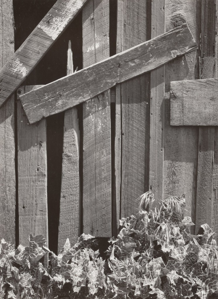 """""""Boards and Thistles, South San Francisco,"""" 1932, by Ansel Adams, from """"The Triumph of Group f/64"""""""