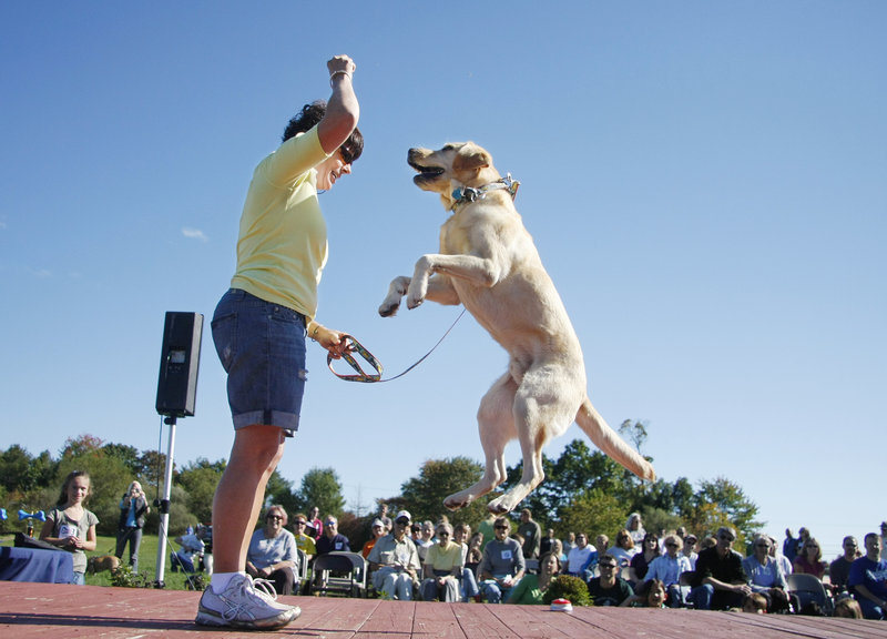 """Valancy Harlow of Saco and her yellow Lab, Samson, 5, perform a jump at the Woofminster Amateur Dog Show at Camp Ketcha in Scarborough on Saturday. The """"show"""" is really a collection of games and off-beat contests."""