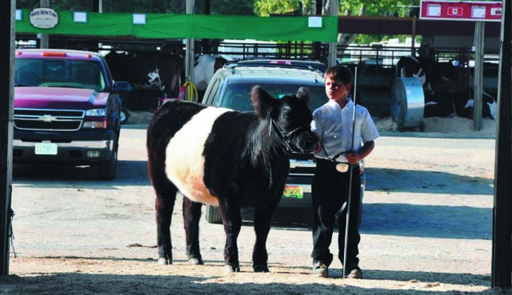 Alec Fortin, 10, and his heifer, Moonshadow Gabby, have won eight first-place awards this summer and fall.