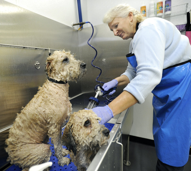 Paulette Witherell washes two dogs, Jack and Bodhi, at The Dog Wash Etc., a Portland pet grooming business that recently moved to a larger space on Forest Avenue.