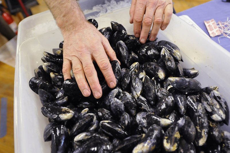 Phil Gray of New Meadows Mussels in Harpswell arranges his display.