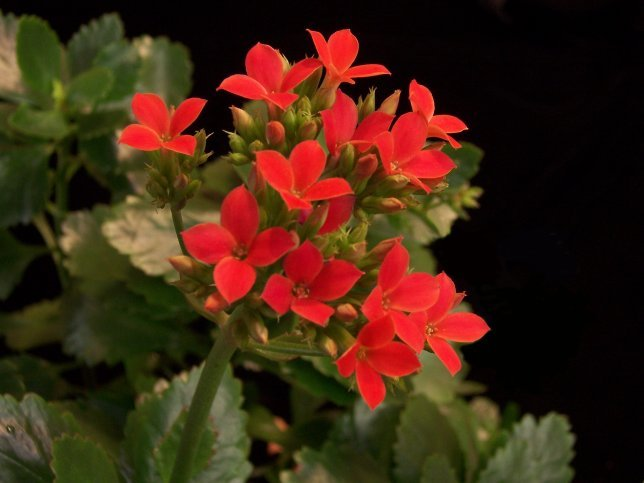 Kalanchoe is among the plants that are colorful this time of year and sell well.
