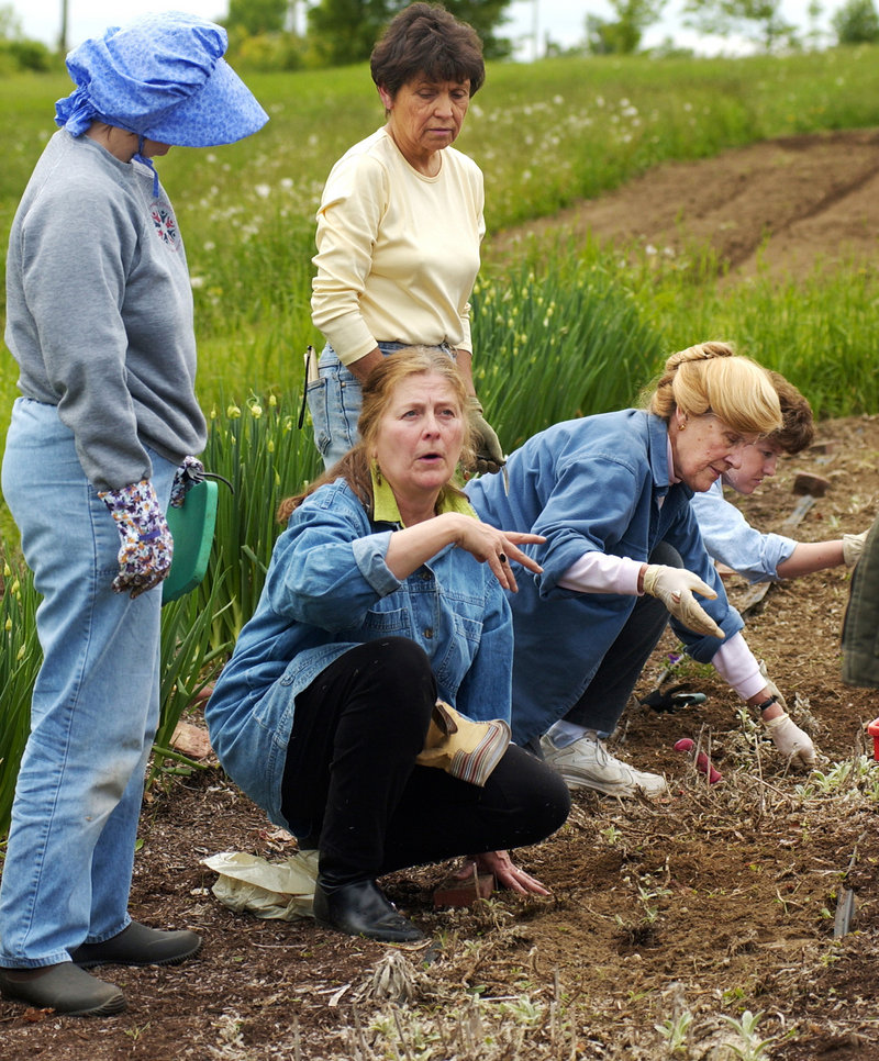 Master Gardener Betsey-Anne Golon directs her herb internship group at Shaker Village garden in 2004.