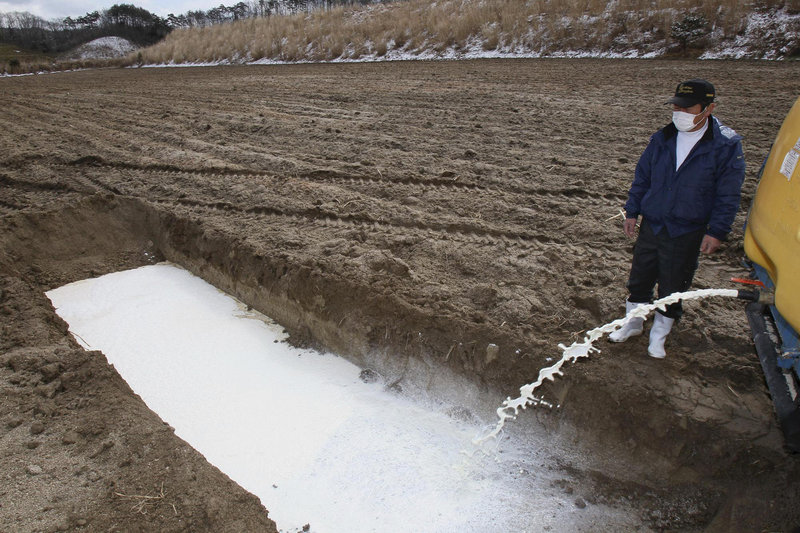 A dairy farmer in Iitatemura, Fukushima Prefecture, in northeastern Japan, watches milk being dumped into a corn field. Fears are growing in Japan about the nation's food supply as radiation from the Fukushima Dai-ichi nuclear plan seeps in milk, vegetables and water.