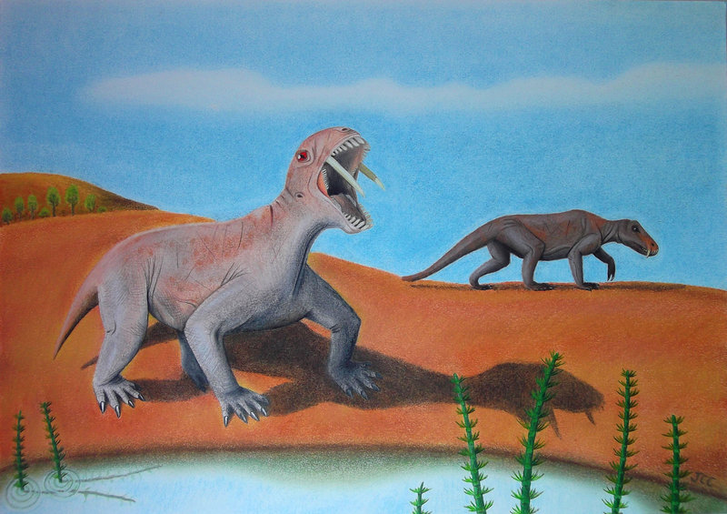 Tiarajudens was part of a group of animals called 'mammal-like reptiles.' About the size of a large dog, it had canines about 5 inches long.