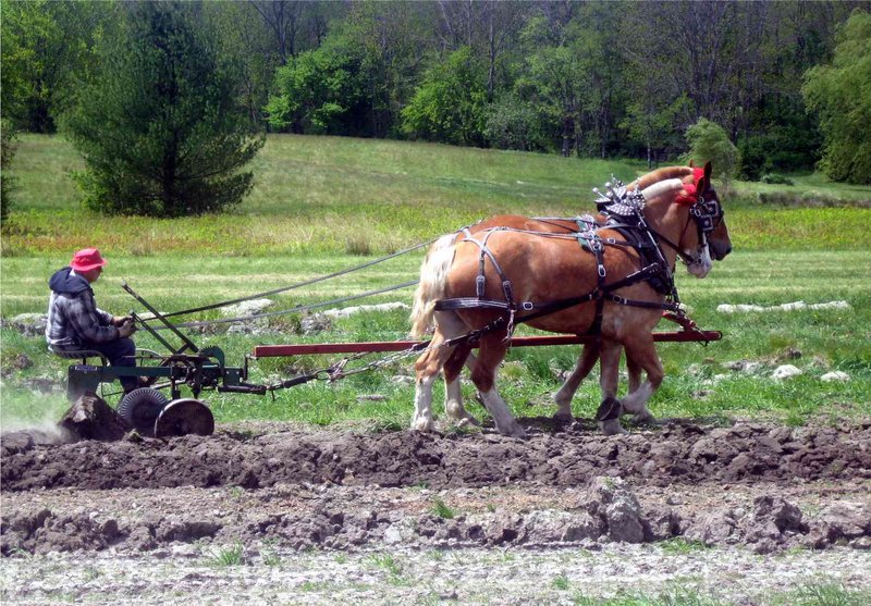 Sonny Richards and his Belgians show how it's done at last year's Plow Day. This year's Plow Day in North Yarmouth, set for Saturday, will feature demonstrations and rides.